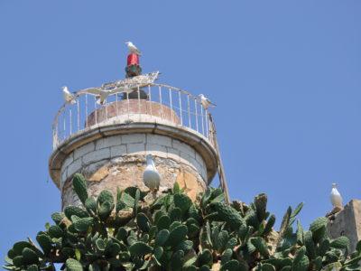 Ορνιθοπανίδα, Ερημίτης, Κέρκυρα