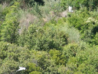 Erimitis, Corfu