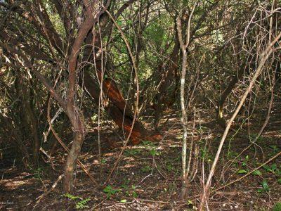Αδιαπέραστο δάσος, Ερημίτης Κέρκυρα